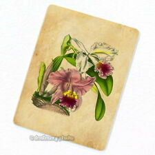 Ruby Lipped Cattleya Orchid Deco Magnet, Fridge Vintage Botanical Illustration