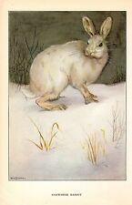 """1926 Vintage ANIMALS """"SNOWSHOE RABBIT"""" GORGEOUS COLOR Art Print Plate Lithograph"""