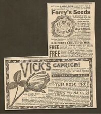 VINTAGE AD FOR FERRY'S SEEDS & VICK'S CAPRICE STRIPED ROSE