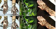 Henna Plant 100+ Seeds (Lawsonia Inermis,Tattoo & Hair Dye Plant)- Very Rare...