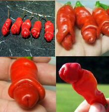 Organic Peter 20Pcs Pepper Seeds ,special ,funny Capsicum annuum RED plant EY