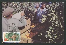 CISKEI MK 1988 FLORA FRUIT CITRUS MAXIMUMKARTE CARTE MAXIMUM CARD MC CM d6164
