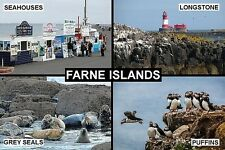 SOUVENIR FRIDGE MAGNET of THE FARNE ISLANDS ENGLAND