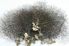 1 x Jumbo black sea fan fish tank aquarium decoration, sea coral ornament TR-03