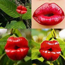 20X Sexy Red Lip Flower Seeds Garden Park Yard Plant Psychotria Elata Seeds CUMS