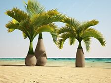 10 Pcs/bag Bottle palm tree Seeds Exotic Plants Bonsai tree Tropical Ornament...
