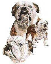 ENGLISH BULLDOG MultiDogs on Twelve identical 6 inch fabric squares to Quilt-Sew