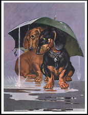 DACHSHUND DOGS SHELTERING FROM THE RAIN CHARMING VINTAGE STYLE DOG PRINT POSTER