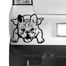 BULLDOG FRANCESE adesivo vinile decalcomania, auto, decalcomania, PARAURTI, Laptop, finestre, muro JMD..