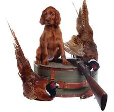 Birthday Blank Card Red Setter Dog & Fast FREE 1st class Postage