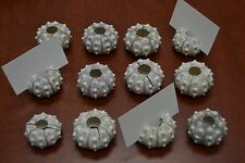 6 PCS SPUTNIK SEA URCHINS SEA SHELL BEACH WEDDING CARD HOLDER #7845