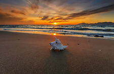 Framed Print - Large Seashell on the Ocean Beach at Sunset (Picture Poster Art)