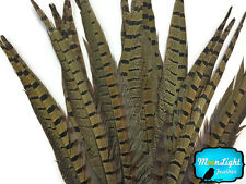 """10 Pieces - 6-8"""" NATURAL Ringneck Pheasant Tail Feathers"""