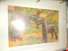 E Miner Kerry Blue & Manchester Terrier book plate 1936 National Geographic Mag