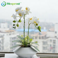 100PCS Potted Plants Phalaenopsis Orchid Flower Seeds Rare White Butterfly Seeds