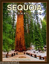 Sequoia National Park California United States Travel Advertisement Art Poster