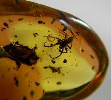 Amber Dominican Republic Fossil Spider Insect Stone Collectible 2.4g Pendant