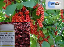 Schizandra Berries Wu Wei Zi 100g concentrated extract (1:7)