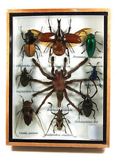 Real Butterfly Insect Bug Taxidermy Display Framed Box Small Set Gift gpasy 12