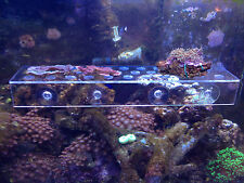 X-Large Clear Acrylic Frag Will hold 32 Frag plugs or small corals chalice zoas