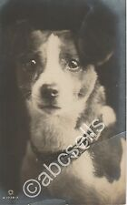 RPPC of JACK RUSSELL TERRIER postcard REAL PHOTOGRAPH dog Rotary Photo