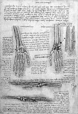 Leonardo Da Vinci Bones of the Hand  Anatomy Poster Print Art