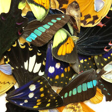 LOTS  REAL BUTTERFLY wing jewelry butterfly material ooak fairy DIY artwork #7