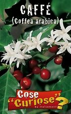 COFFEA ARABICA confezione/pack 5 semi seeds Pianta del caffè Arabica coffee