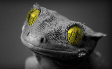 Framed Print - Gecko Black & White with Yellow Eyes (Picture Poster Animal)