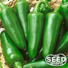 Tam Jalapeno Seeds 75 SEEDS-SAME DAY SHIPPING