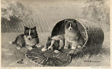 Vintage Postcard CENTRE OF ATTRACTION Three Cute Puppies in Basket  (GRN)