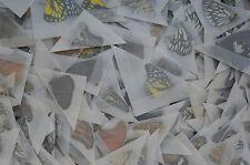500 Mixed Unmounted Butterflies # NEW COMING 2016 Vietnam NORTH