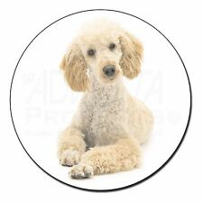 Apricot Poodle Fridge Magnet Stocking Filler Christmas Gift, AD-CP7FM