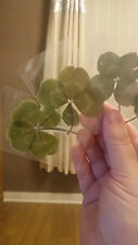 GENUINE REAL 4 FOUR LEAF CLOVER WEDDING FAVOUR GOOD LUCK SPELL LUCKY Charm