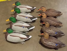 Lot of 8 Hard Core Mallard Floater Decoys   Excellent Condition
