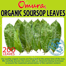 OMURA ORGANIC SOURSOP LEAVES Guanabana Graviola Guyabano 200+ LEAVES DRIED