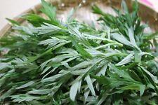1X Chinese Wormwood; Mugwort Plant /Chinese medicine Herb /艾草