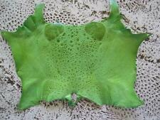 New Bufo Marinus Cane Toad Skin Leather Collectible Taxidermy Lime Green 6 ""