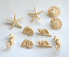 Beach Beauties / Dress It Up Jesse James / Sea Shells ~ Sea Horse Shank Buttons