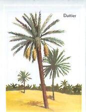 IMAGE CARD 60s  Palmier dattier Date palm Phoenix dactylifera Datte Fruit Date