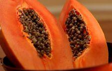 1 PACKET OF SWEET PAPAYA FRUIT OR VEGETABLE SEEDS