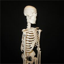*NEW* 16.5in Mini Human Tiny Tim Skeleton Anatomical Anatomy Model + Stand