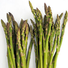 Vegetable Seed ASPARAGUS- Mary Washington Asparagus Officinalis- Pack of 40 Seed