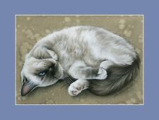Ragdoll Cat Print Curious and Playful by I Garmashova
