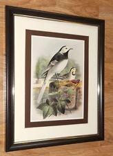 John Gerard Keulemans framed wall art - 8''x10'',  Pied wagtail artboard print