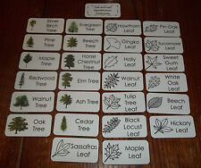 26 Tree and Leaf Identification Flash Cards.  Nature Picture Word Cards