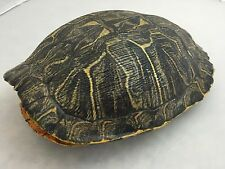 Real Turtle Shell - Red Eared Slider 9 - 10 inch