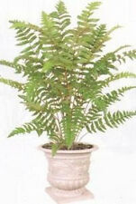 "LEATHER FERN BUSH 36"" ARTIFICIAL PLANT SILK TREE PALM Not POTTED PHOENIX BOSTON"