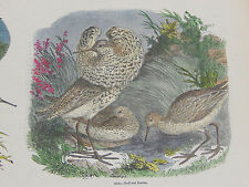 Hand Color Prints c.1856 - Charles Knight's Illustrated Natural History #20