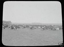 Glass Magic lantern slide SUNDAY JOINT ON THE HOOF C1910 ARGENTINA CATTLE COWS